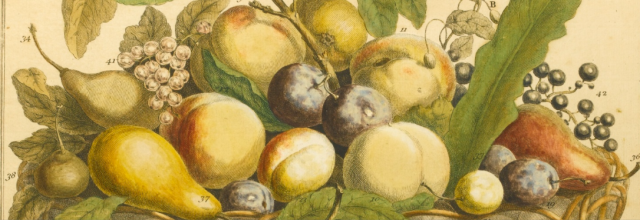 deatil from xxxx in Robert Frurber's Twelve months of Fruit, 1732