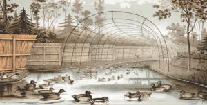 from Sir Ralph Payne-Gallwey, The Book of Duck Decoys: Their Construction, Management and History, 1886