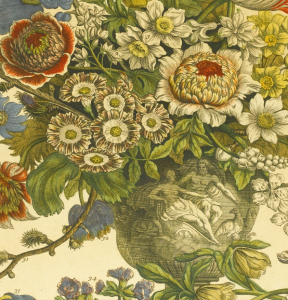 deatil from March in RObert Furber's TwelveMonths of Flowers, 1730