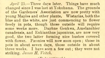 Extract from Traveller's Notes by James H Veitch, Gardeners Chronicle 13th May 1893