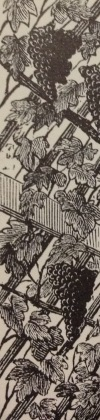 "detail from ""A wonderful Vine"" in Garden Work, August 1888"
