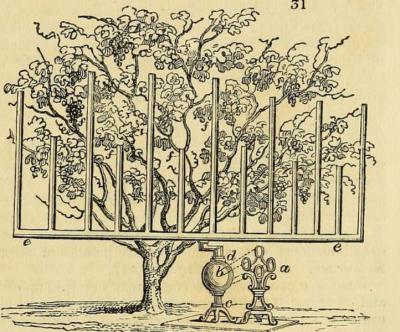 From The Gardeners magazine, September 1829