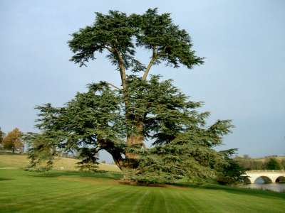 http://www.comptonverney.org.uk/wp-content/uploads/2016/03/Cedar-1-Front-Lawn.jpg