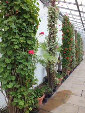 Inside the conservatory David Marsh, April 2016