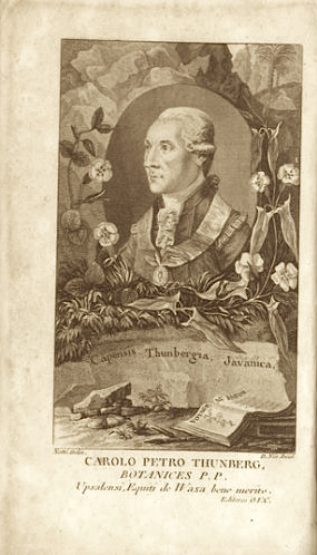 Carl Peter Thunberg from the 1790s of his travel journal. https://www.ikfoundation.org/ifacts/carlpeterthunberg.php