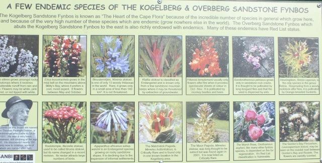 Image from an information board at the Harold Porter Botanic Garden, David Marsh, Feb 2106