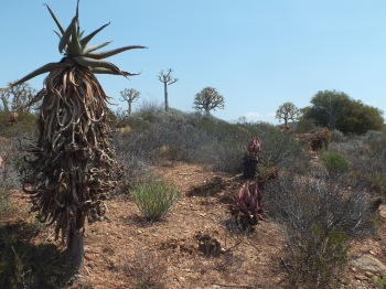 In the Karoo National Botanic Gardens, David Marsh, Feb 2016
