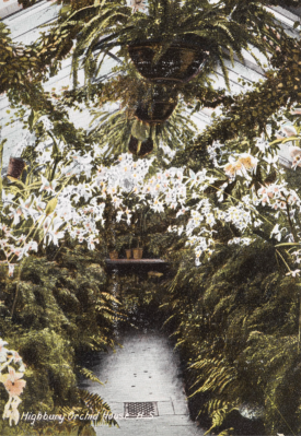 Postcard of Joseph Chamberlain's Orchid House at Highbury   by Birmingham Museum and Art Gallery