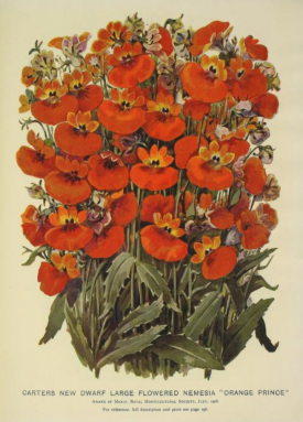 from 1907 Garden and Lawn Catalogue