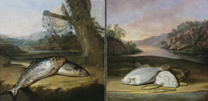 Two of the fish paintings in the banqueting room National Trust