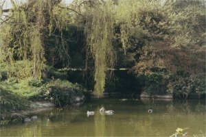 the lake when it had waer in it! https://rocks4me.files.wordpress.com/2013/01/5-1-21-05-westonbirt-waterfall-2.jpg
