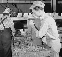 Bridgeton, New Jersey. Seabrook Farm. Packing Birds Eye frozen foods. Prints & Photographs Division, Library of Congress.