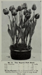 Carters picked bulbs as supplied to the Royal Parks and Palace Gardens, Hampton Court, &c., &c. / Carters Tested Seed Inc. by Carters Tested Seeds, Inc; Henry G. Gilbert Nursery and Seed Trade Catalog Collection Published 1916