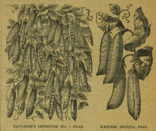 H.Cannell & Sons Catalogue of Perfect Seeds 1899 https://archive.org/stream/HCannellSonsmat00HCanAG#page/n7/mode/2up