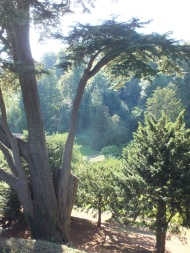 Looking down in the valley through one of the Bumstead cedars,DM