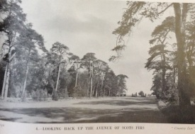 The Drive looking towards the new gates, 1931 Counyry Life