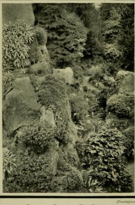 Frontispiece to Alpine Plants https://archive.org/details/alpineplantsprac00clar