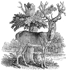 Stag from Quadrupeds