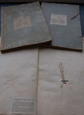 George Don's Herbarium Britannicum showing Eriophorum alpinum (now extinct in the UK) http://stories.rbge.org.uk/archives/4218