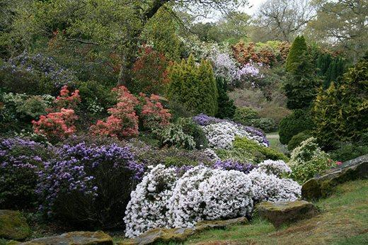 The rock garden at Exbury https://www.rhs.org.uk/gardens/partner-gardens/articles/Gardening-on-the-rocks