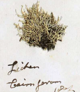 Lichen sample included in a letter to James Smith 29 May 1806 http://linnean-online.org/64863/
